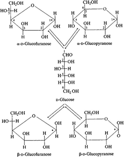carbohydrates article carbohydrate article about carbohydrate by the free