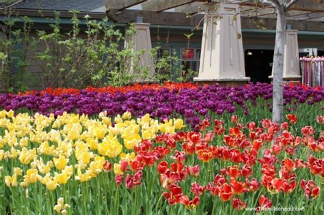 A Trip To The Cincinnati Zoo And Botanical Garden Botanical Garden Cincinnati