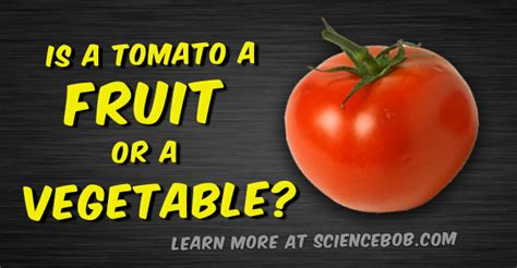 a fruit or vegetable is a tomato a fruit or a vegetable sciencebob