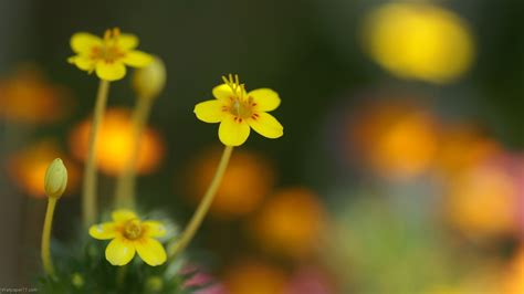 Wallpaper Small Flower | small flower wallpaper wallpapersafari