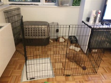 puppy apartment crate crate your puppy goldendoodle breeder ny goldendoodle puppies ny
