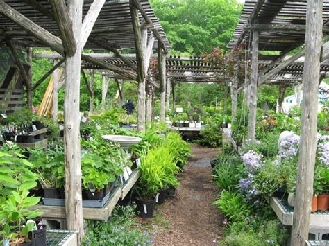 pergola plants for shade shade plants the pergolas shade plants
