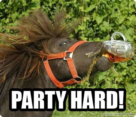 Horse Birthday Meme - 15 very funny horse pictures