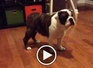 puppies for sale newport news va pets newport news va free classified ads