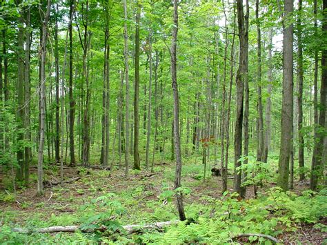 woodland forest plants and trees temperate deciduous forest plants www imgkid com the