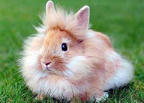 alimentazione coniglio testa di coniglio testa di carattere e info sul coniglio nano