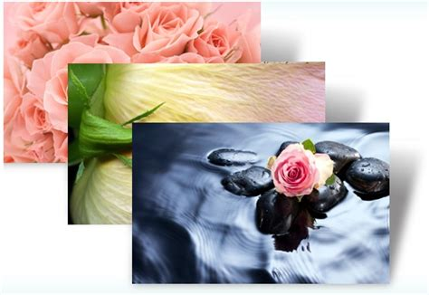 rose themes for win7 desktop fun roses theme for windows 7 valentine s day