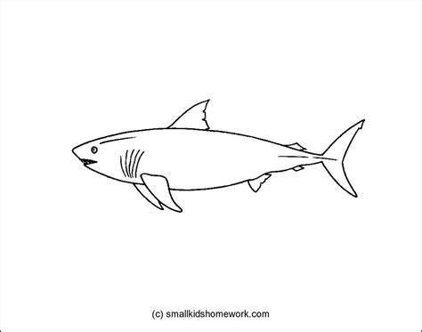 Outline Picture by Shark Outline Picture For Coloring