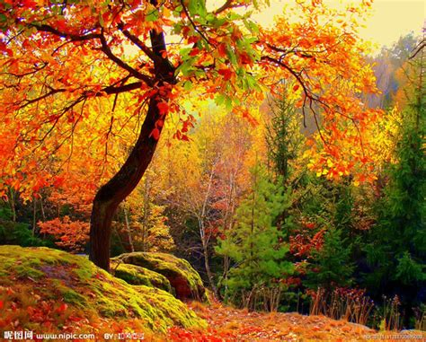 the world s best photos of autumn and woodlands flickr hive mind 20 most beautiful fall views pictures of the world moe zoe