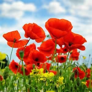 quelles sont les fleurs 224 planter au printemps ooreka