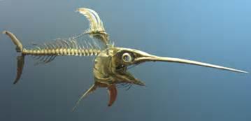 espadon poisson