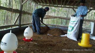 Pembersih Ayam membersihkan kandang setelah panen kus peternakan