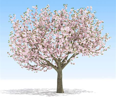 cherry tree 3ds max free plant models for growfx 3ds max models kstudio 3ds max plugins scripts