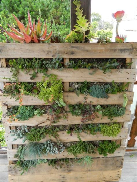 succulent wall upright and growing crafts diy