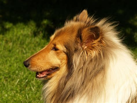 ear problems in dogs skin yeast infection on dogs breeds picture