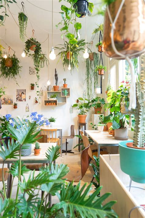 home plants decor wildernis amsterdam gardens shopping in amsterdam and