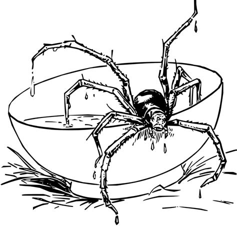 printable spider images free printable spider coloring pages for kids