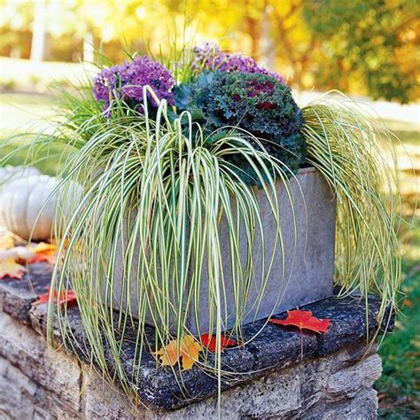 fabulous fall flower containers 98 best ornamental cabbage planter images on pinterest