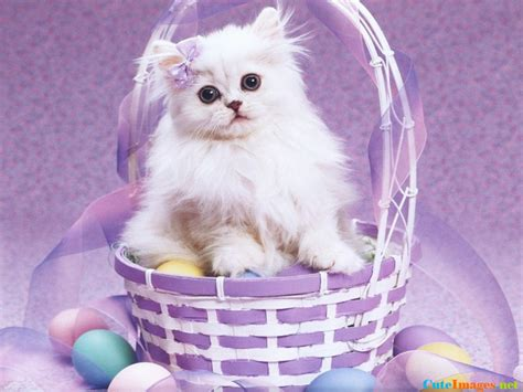 cat easter wallpaper free easter cat wallpaper name cuteimages net