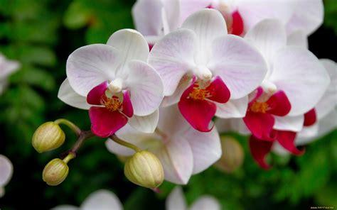 imagenes flores blancas orqu 205 deas galer 237 as de im 225 genes
