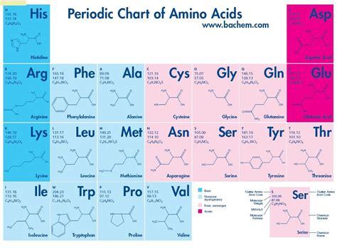 diagram of amino acid bioboy7
