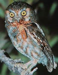 what do barn spiders eat owl owls and more owls
