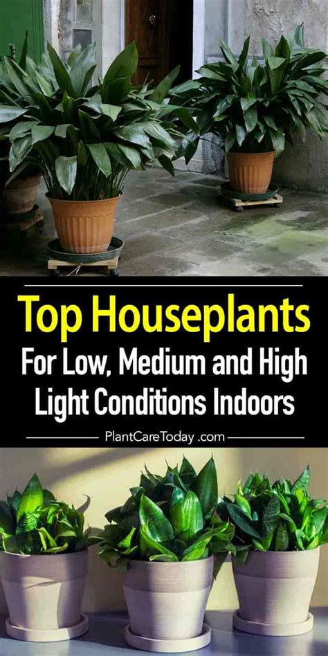 houseplants for low light conditions 8626 best container gardening images on pinterest garden