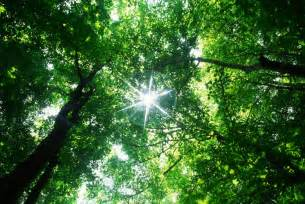The Rainforest Canopy by Uncertain Future For International Forest Scheme