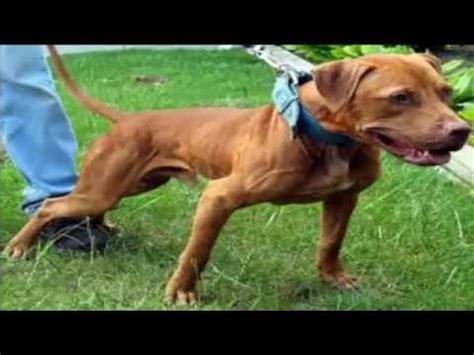 161 top 10 ataques de animales a personas imagenes fuertes hombre salva a mujeres del ataque de perros pitbull doovi