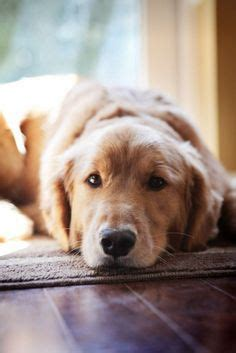 How To Get Rid Of House Odors 1000 ideas about stinky dog on pinterest fleas your