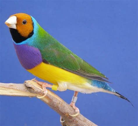 las aves exticas mi las aves ex 243 ticas brilliant birds