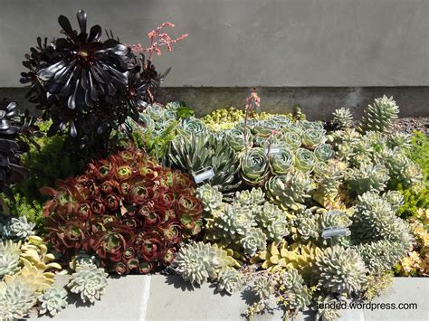 Succulent garden ideas: mixed succulent beds in a modern