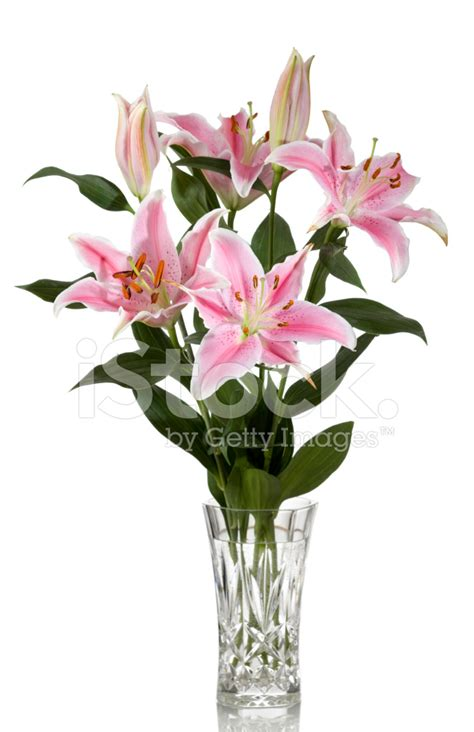 Lilies In A Vase by Tiger Lilies In Vase Stock Photos Freeimages