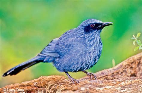 passport to texas 187 blog archive 187 birding vagrant species 2