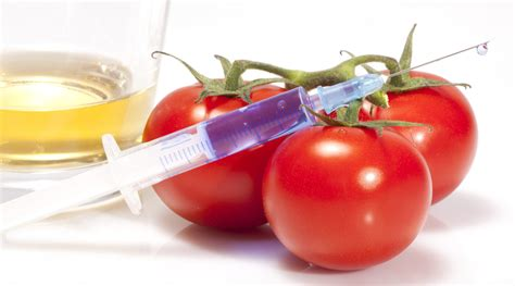 biotecnologia alimentare ogm ue approva la commercializzazione di altri alimenti