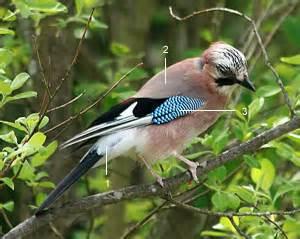 photos oiseaux des jardins
