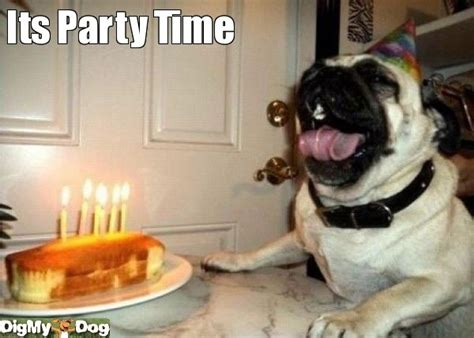 pug puppy birthday dogs birthday pug pugs