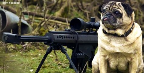If A Misdemeanor Is Dismissed Will It Appear On A Background Search They Will Take Your Dogs Then They Will Take Your Guns Conservativehq
