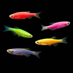 The 55 gallon GloFish Pack contains the following: