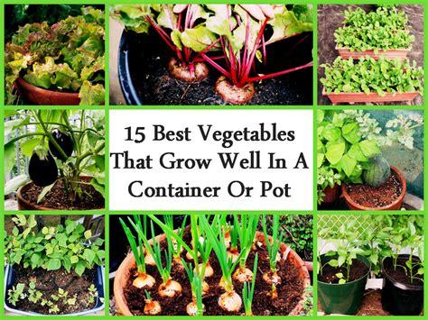 Pot Vegetable Gardening For Beginners Growing Vegetables In Pots For Beginners Outdoor