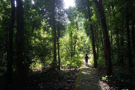 film petualangan alam asyiknya jelajah hutan bersama anak anak di taman wisata