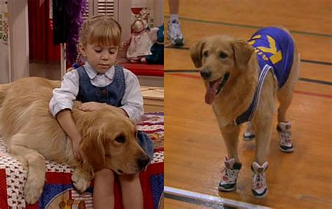 dog on full house here are 15 facts about full house that you didn t know