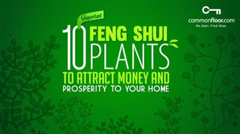 feng shui pflanzen reichtum 10 important feng shui plants to attract money and