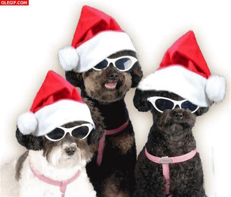 imagenes gif de feliz navidad gif estos perros te desean 161 feliz navidad gif 2359