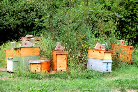 Backyard Honey Bee Hive by Backyard Beekeeping