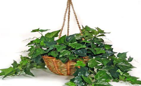 conhe 231 a plantas que umidificam filtram e oxigenam
