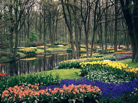 Netherland Flower Garden Colorful Keukenhof Gardens World For Travel