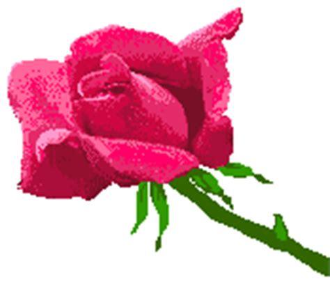 imagenes gifs variadas gifs de rosas amarillas y rosas