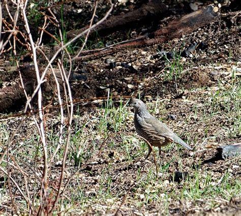 sierra nevada quail canon rebel eos 200d 800d talk