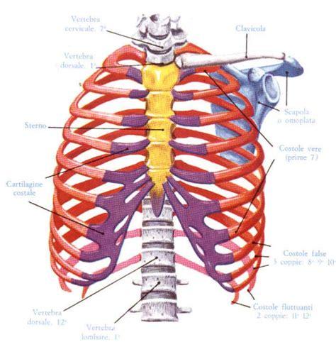 dolore gabbia toracica dolore intercostale a cosa 232 dovuto e come risolverlo